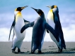 ca215e7929_penguins.jpg